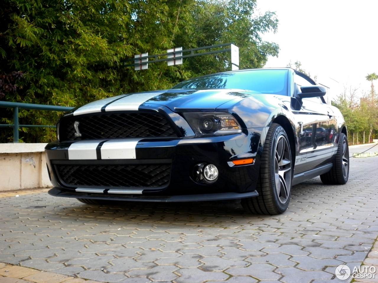 ford mustang shelby gt500 convertible 2010 21 december 2012 autogespot. Black Bedroom Furniture Sets. Home Design Ideas